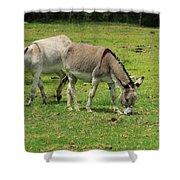 Two Jerusalem Donkeys In A Field Shower Curtain