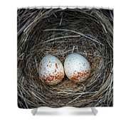 Two Junco Eggs In The Nest Shower Curtain