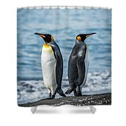 Two King Penguins Facing In Opposite Directions Shower Curtain
