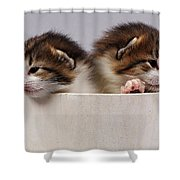 Two Kittens In A Wooden Bucket Shower Curtain