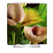 Two Lily With Leaf Shower Curtain
