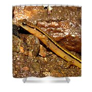 Two Lined Salamander Shower Curtain
