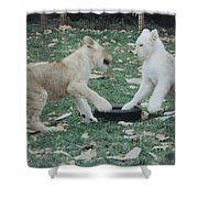 Two Lion Cubs Playing Shower Curtain