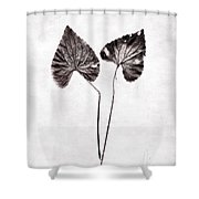 Two Little Violet Leaves Shower Curtain