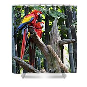 Two Macaws Shower Curtain