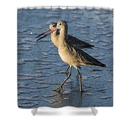 Two Marbled Godwits Shower Curtain