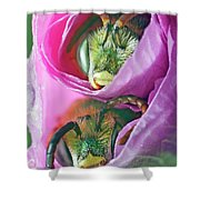 Two Metallic Green Bees Rolled Up In A Pink Flowers Petals Shower Curtain