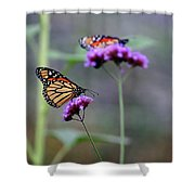 Two Monarchs On Verbena Shower Curtain