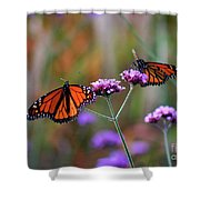 Two Monarchs Sharing 2011 Shower Curtain