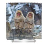 Two Monkeys Shower Curtain