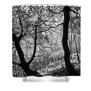 Two Monochrome Tress Shower Curtain