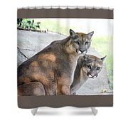 Two Mountain Lions Shower Curtain