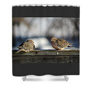 Two Mourning Doves Shower Curtain