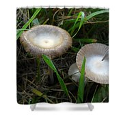 Two Mushrooms In Grass Shower Curtain
