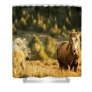 Two Mustangs Post Playtime At The Waterhole Shower Curtain
