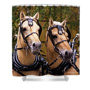 Two Norwegian Fjords 3 Shower Curtain