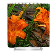 Two Orange Daylilies Shower Curtain