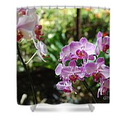 Two Orchid Branches Number One Shower Curtain
