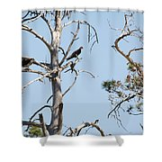 Two Osprey Shower Curtain