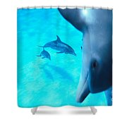 Two Pairs Of Dolphins Shower Curtain
