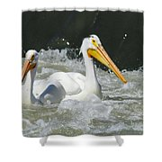 Two Pelicans At Horn Rapids Shower Curtain