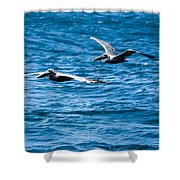 Two Pelicans Flying Shower Curtain