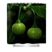 Two Peppers Shower Curtain