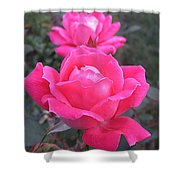 Two Pink Double Roses Shower Curtain