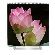 Two Pink Lotus Shower Curtain