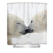 Two Polar Bears Ursus Maritimus Shower Curtain by Richard Wear