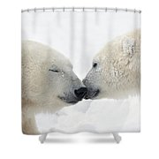Two Polar Bears Ursus Maritimus Shower Curtain