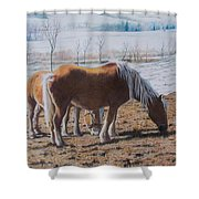 Two Ponies In The Snow Shower Curtain
