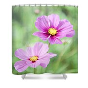 Two Purple Cosmos Flowers Shower Curtain