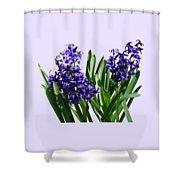 Two Purple Hyacinths Shower Curtain