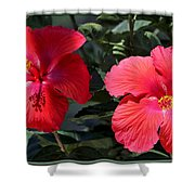 Two Red Hibiscus With Border Shower Curtain