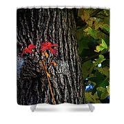 Two Red Leaves Shower Curtain