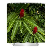 Two Red Tropical Flowers Blooming Shower Curtain