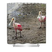 Two Roseate Spoonbills 2 Shower Curtain