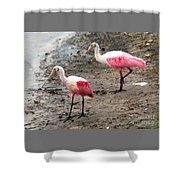Two Roseate Spoonbills Shower Curtain