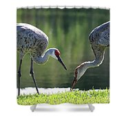 Two Sandhills By The Water Shower Curtain