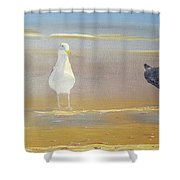 Two Seagulls Wondering Where The Chips Have Gone Shower Curtain