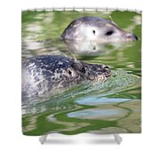 Two Seal Swimming Nature Scene Shower Curtain