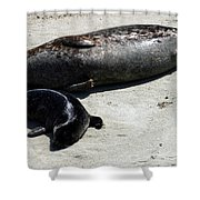Two Seals Shower Curtain