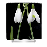 Two Snow Drops Shower Curtain