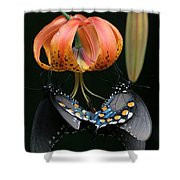 Two Spicebush Swallowtail Butterflies On A Turks Cap Lily Shower Curtain