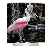 Two Spoonbills Shower Curtain