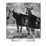 Two Stipers In Black And White Shower Curtain