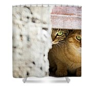 Two Stray Cats Shower Curtain