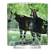 Two Stripers Shower Curtain
