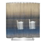Two Swans In Movement Shower Curtain